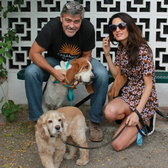 George and Amal Clooney Adopt Rescue Dog
