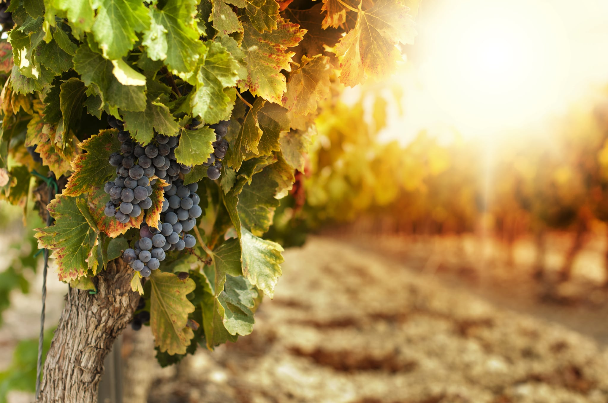 For the Wine-Loving Bride: A Winery Tour