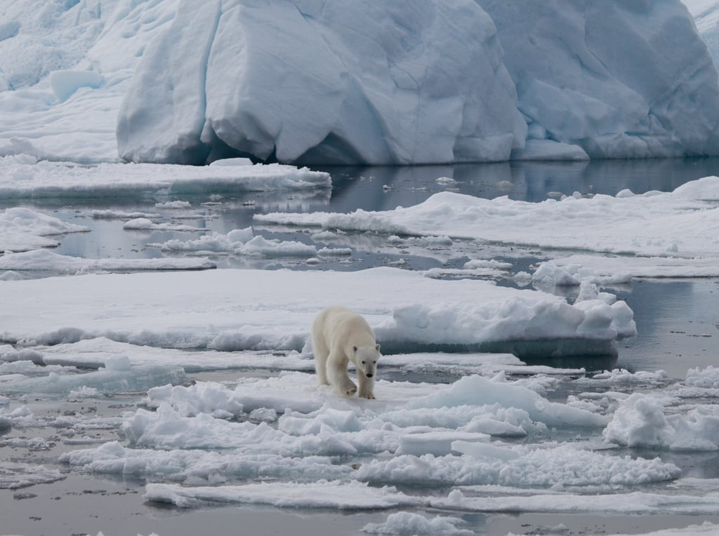 Polar bears are one of several animals that call the Arctic home. Photo courtesy of Warner Home Entertainment