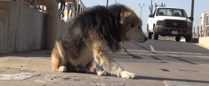 After Being Abandoned, This Rescued Senior Dog Makes an Amazing Recovery