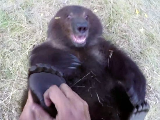 WATCH: Man Plays with Grizzly Cub, Because Man Has No Fear