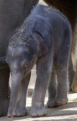 Hi There, Baby Elephant! What Shall We Call You?