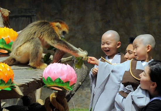 Sugar Shout Out: Happy National Monkey Day!