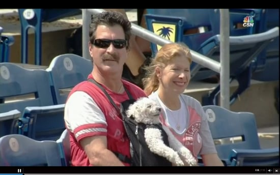 Local Dog Attains Zen in Baby Carrier at Phillies Game