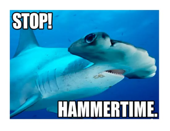 Hilarious Memes That Prove Sharks Are Just Misunderstood