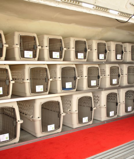 Pet Airways Makes First Flights Today: Are You Buying In?