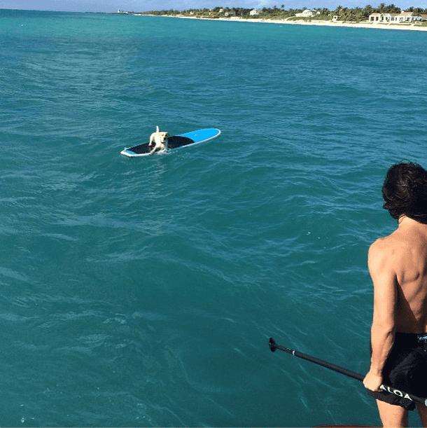 Looks like someone got stranded out at sea! Source: Instagram user constjablonski
