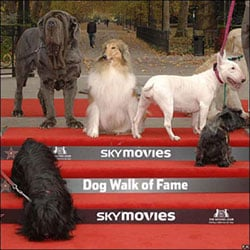 London's Dog Walk Of Fame Honors our Favorite K9's
