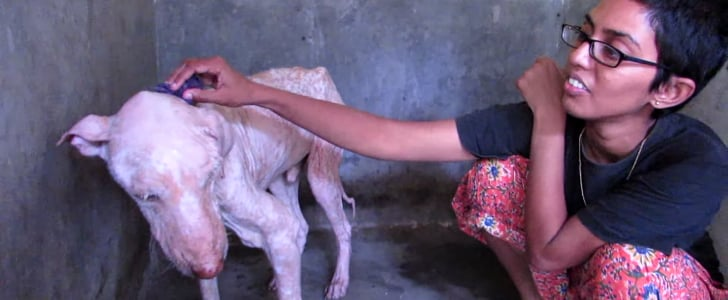 This Sickly Street Dog Is Getting His Happily Ever After