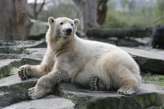 Pet Psychic Says Knut is Unhappy