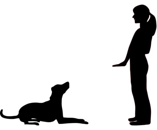 Communication on this topic: How to Teach a Dog to Lie , how-to-teach-a-dog-to-lie/