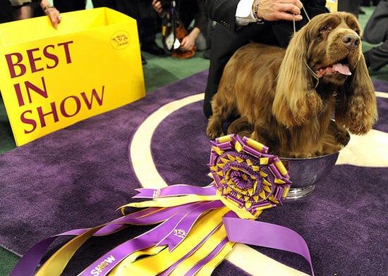 Will You Watch Westminster?