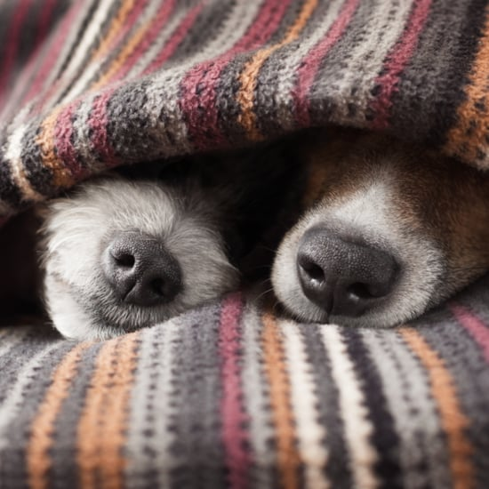 Books For Dog-Lovers