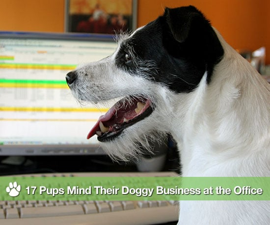 17 Pups Mind Their Doggy Business at the Office