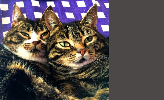 Dwarf-Cats Elfie and Gimli Share Antics on Instagram