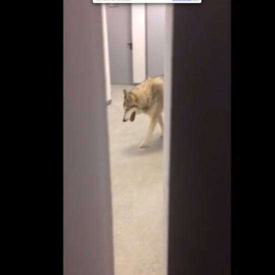 Wolf in Olympic Village
