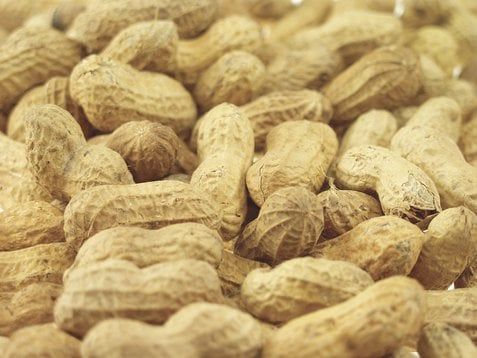 A Cure To Peanut Allergies?