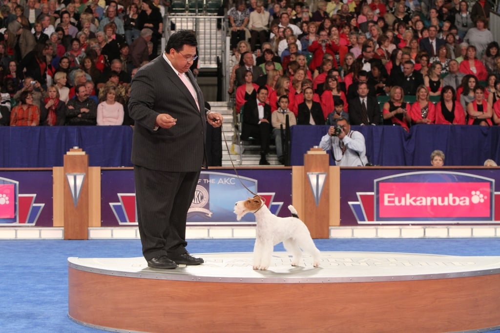 """GCH CH Steele Your Heart (""""Eira"""") stole the judge's heart and picks up the top spot in the Terrier group. Source: AKC/Robert Young"""