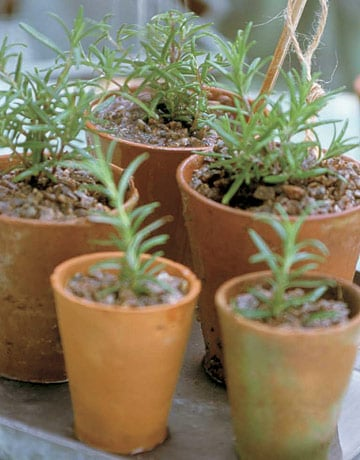 Do You Grow Herbs Indoors in the Winter?