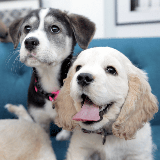 Cute Dogs at the Puppy Bowl 2015 | Video