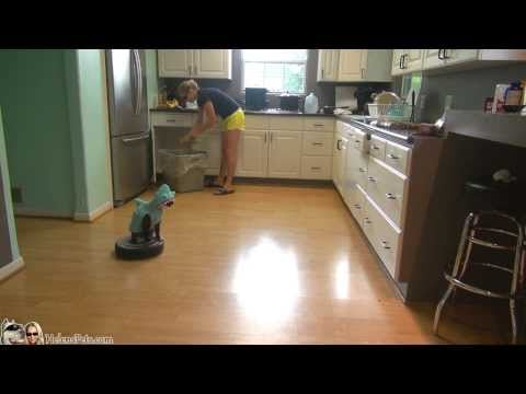 Cat Riding a Roomba | Video