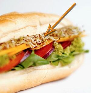 Alfalfa Sprouts Linked to Salmonella