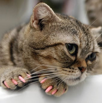 Cat Manicures