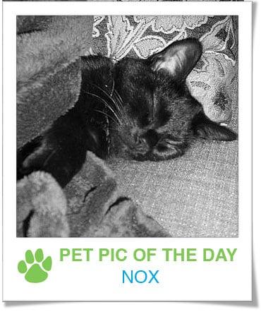 Pet Pics on PetSugar 2009-01-07 09:30:45