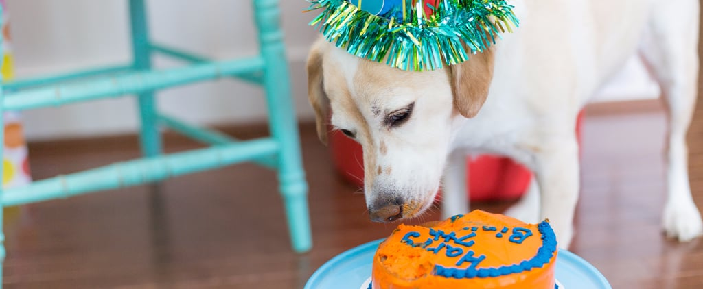 7 Tips to Throw Your Dog a Sweet Birthday Party
