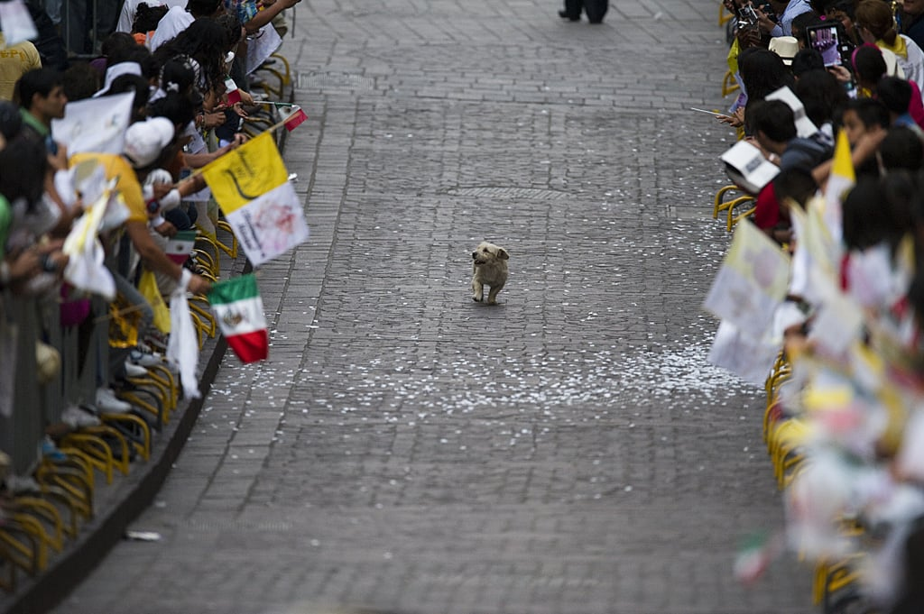 This Dog That Thinks the Parade Is All For Him