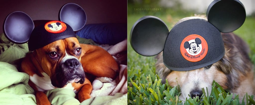 The Easiest Disney Halloween Costume For Your Dog