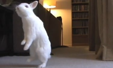 Cute Alert: Bunny Has Some Issues With Hopping