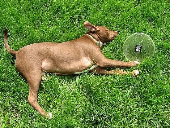 Pet of the Day: Brody's a Frisbee Fiend!