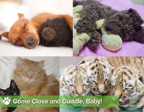 Sugar Shout Out: Get Close With These Cuddly Animals!