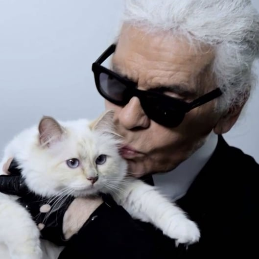 Karl Lagerfeld's Cat | Video