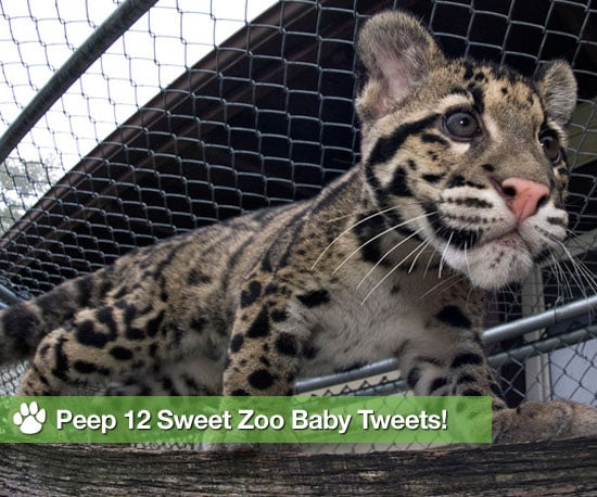 12 Cutest Zoo Babes Spotted on Twitter