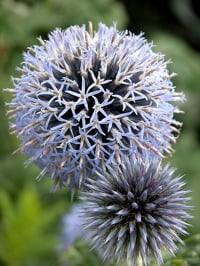 Name This Flower