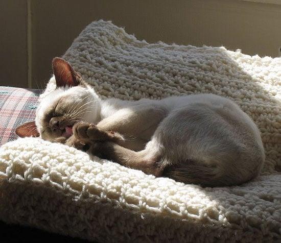 Do You Own a Purebred Cat?