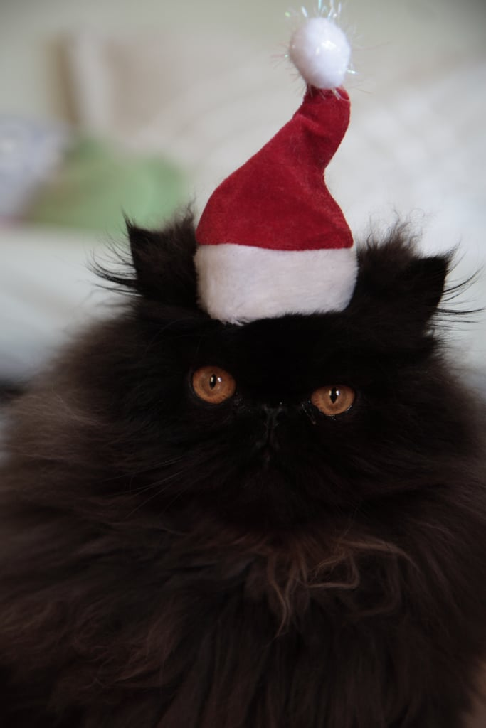 Circle of Moms' Julie Tallhamn shared this festive pic of her Persian, Napoleon, who looked less than thrilled to be wearing a Santa hat.