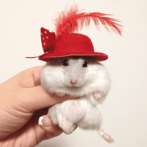 29 Fashionable Pets That Will Make You Forget This Whole Dogs-Wearing-Pants Debate