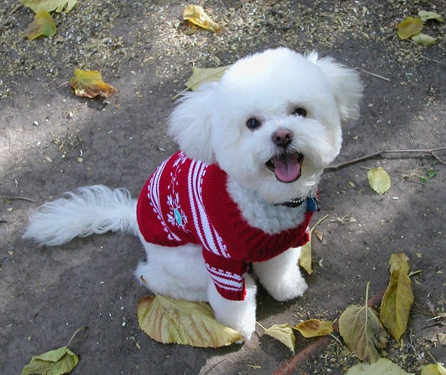 Somebody's a happy camper in a soft, red, knitted sweater.  Source: Flickr user mbtrama