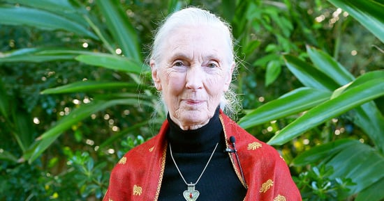 Jane Goodall: Harambe the Gorilla 'Was Putting an Arm Around the Child' Before He Was Killed