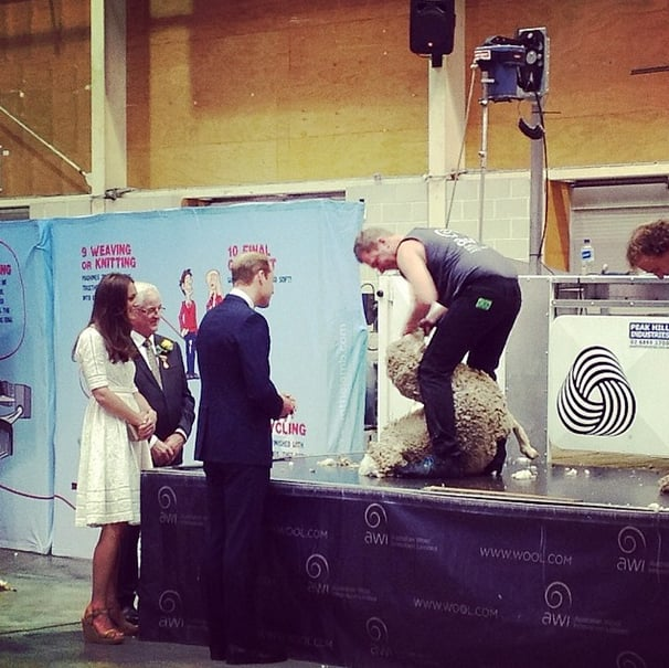 The duke and duchess watched a sheep getting sheared in Australia. Source: Instagram user clarencehouse