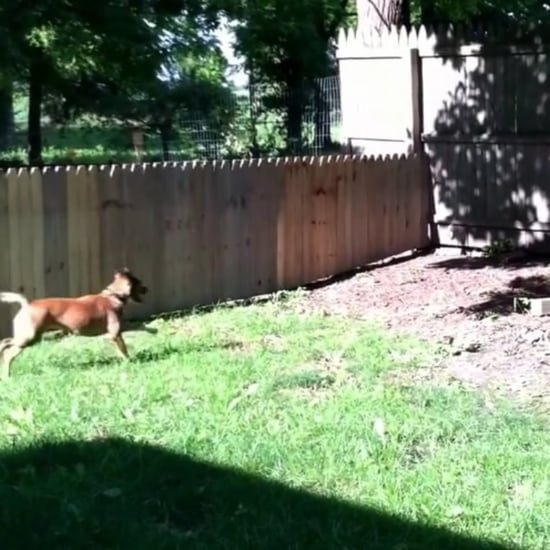Dog Jumping Over Fence | Video