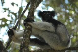 The Indri