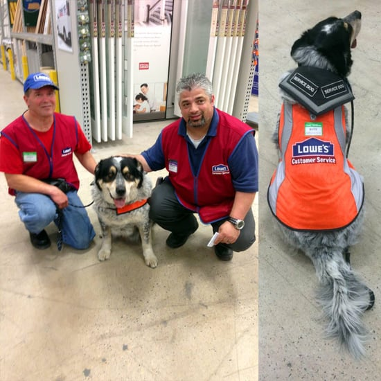 Canadian Lowe's Store Hires Man and His Service Dog, Gives Them Matching Vests