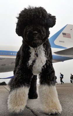 The Vacation's Over, Bo Is Back to Business!