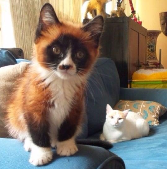 This Cat/Fox/Panda Hybrid | 25 Glorious Cats That Make the ...