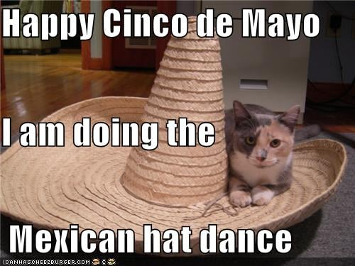 Meow de Mayo.  Source: Cheezburger