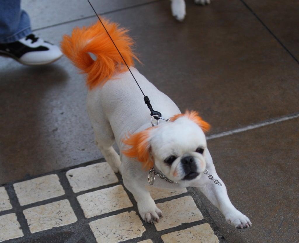 Doggie Streakers